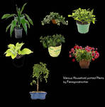 Potted household Plants Stock