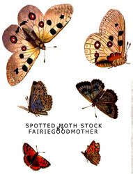 Spotted Moth Butterfly stock by FairieGoodMother