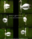 White Swan Stock pack PSD