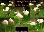 Pink Flamingo Stock Pack psd