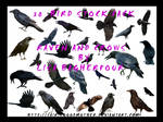 Black Raven and Crow Stock PSD