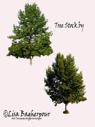 Tree Stock 2 pack PSD