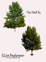 Tree Stock 2 pack PSD by FairieGoodMother