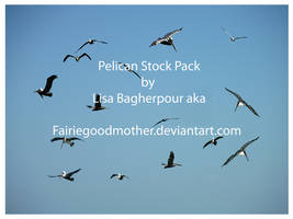 Pelican  stock pack by FairieGoodMother