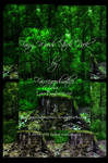 Magical Fairy Woods Stock Pack