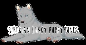 Siberian Husky Puppy Lines