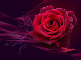 Magical Rose - WP by Lilyas