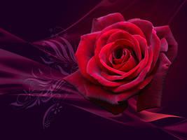 Magical Rose - WP