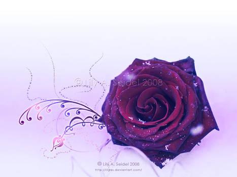 Winter Rose WP