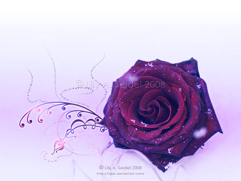 Winter Rose WP by Lilyas