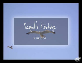 Seagulls Package