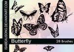 Butterfly'