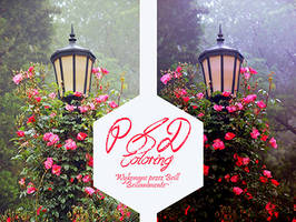 PSD Coloring #69