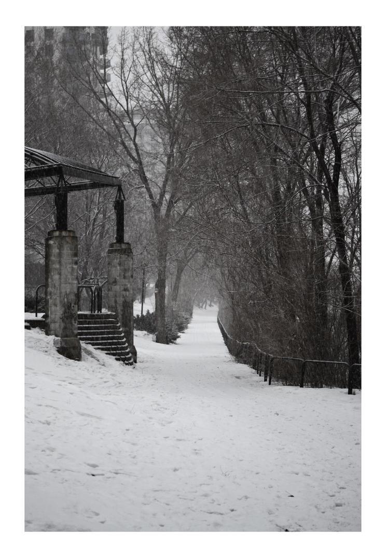 Snow by Ellri