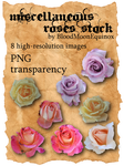 Miscellaneous Roses Stock