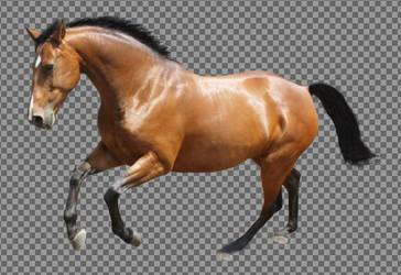 Horse Precut 1 by xEquine-Artx