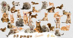 Animal Png Pack