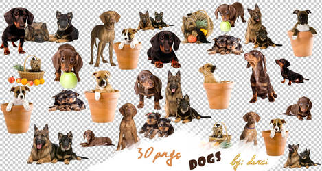 Dog Png Pack