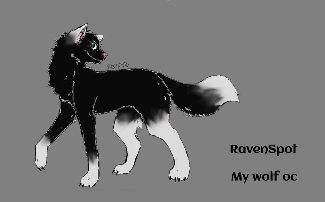 My Wolf OC/ Raven Spot by Animals29337