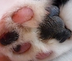 Cat Paws by Renire-Stock