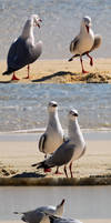 photography-Seagull