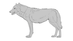 Standing Wolf Lineart (Free, PSD file)