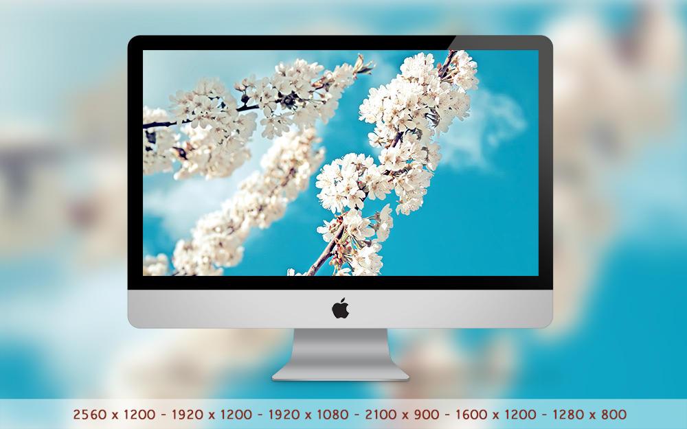 Blooming Flowers Wallpaper by hoatongoc