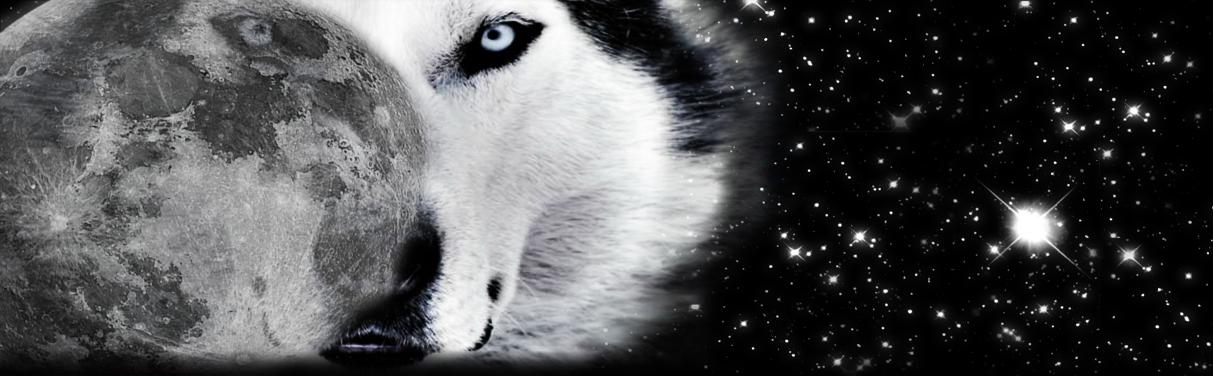 Icy Wolf+Night-Sky JournalSkin by savannahsage