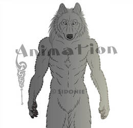 Anthro Wolf Turnaround by Sidonie