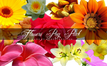 Flowers PNG Pack