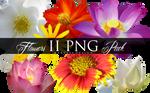 Flowers II PNG Pack