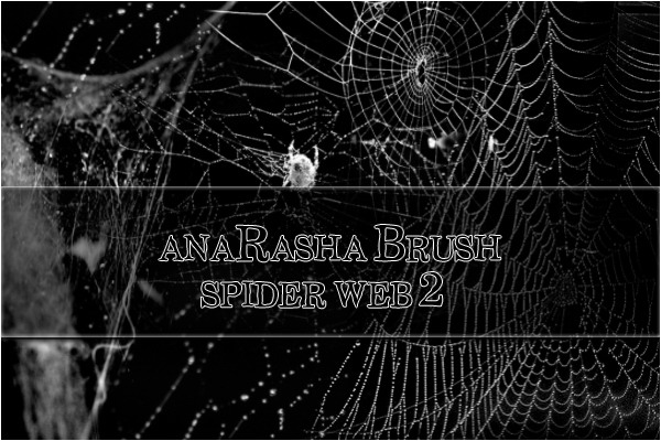 spider web brush 2