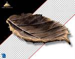 AutumnLeaf 3