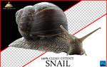 Snail Cutout