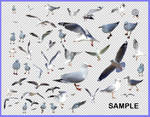 Seagull Pack 1 - HB593200