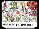 PNG pack #7 - Flower#3 - Vy Tuzki