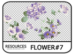 PNG pack #11 - Flower#7 - Vy Tuzki