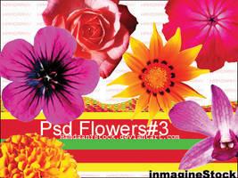 Flowers-3 by HamdaanYstock