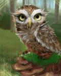 How to Little owl by Dan-zodiac