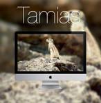 Tamias HD Wallpaper