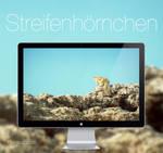 Streifenhoernchen HD Wallpaper