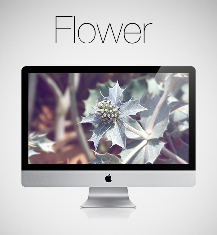 Flower HD Wallpaper