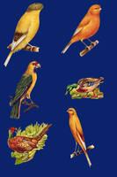Vict pack 22-birds_quaddles by quaddles