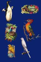 Vict pack 23-birds_quaddles by quaddles