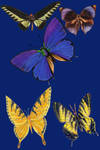Vict pk 27-butterfly_quaddles