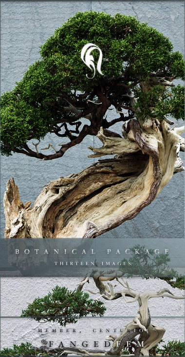 Package - Botanical - 1