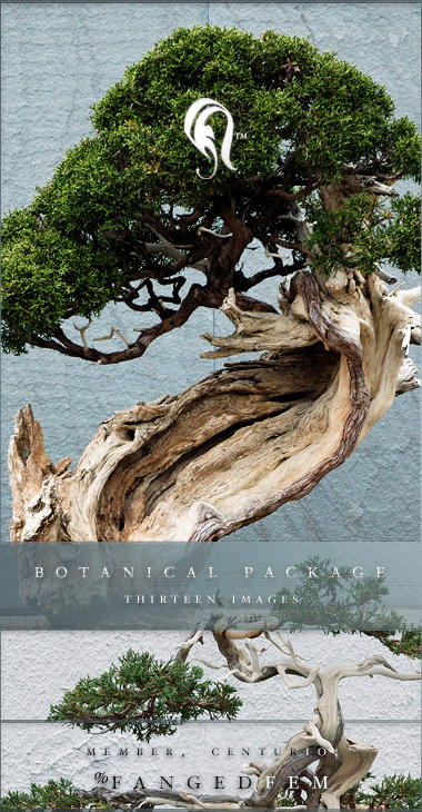 Package - Botanical - 1 by resurgere