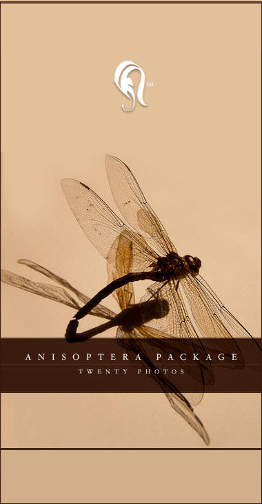 Package - Anisoptera - 01 by resurgere