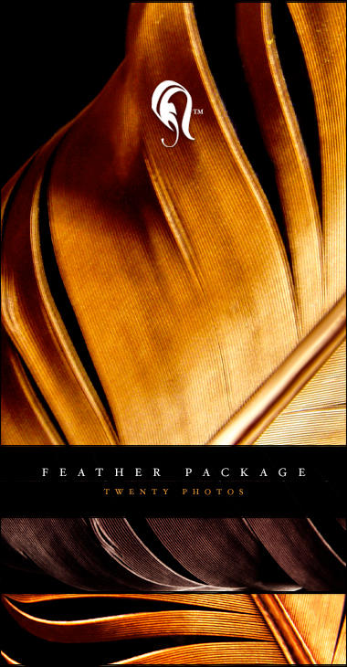 Package - Feather - 1 by resurgere