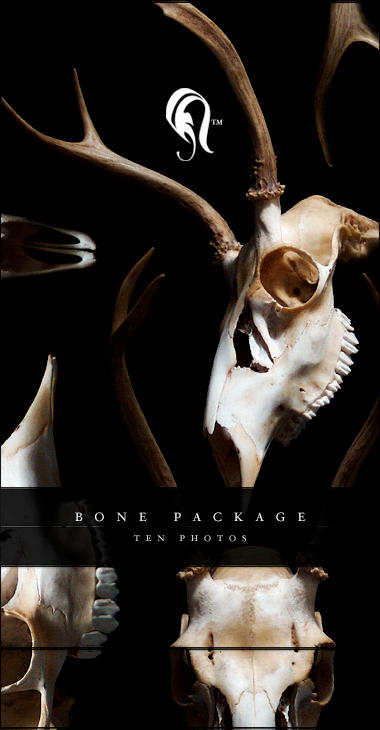 Package - Bone - 0.5 by resurgere
